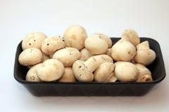 Button mushrooms Royalty Free Stock Photo