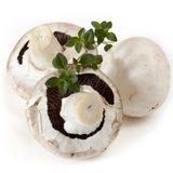 Button Mushrooms with Thyme Stock Photo
