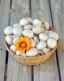 Button mushrooms. Stock Photos