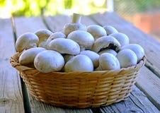 Button mushrooms. Royalty Free Stock Photos