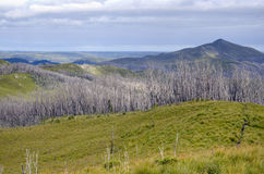 Buttongrass and burnt forest, Tarkine wilderness Stock Image