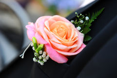 buttonhole Fotografia Stock