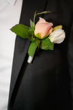 buttonhole of the groom from beige roses Stock Images