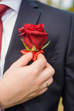 Buttonhole on the groom's suit from a rose Stock Image