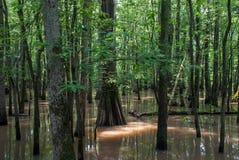 Buttonland träsk av naturligt område för gömställeflodstat, Illinois royaltyfri bild