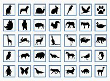 Buttons with animals Royalty Free Stock Photos