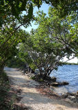 Buttonwood in Biscayne National Park Stock Image