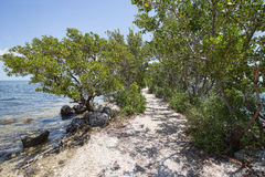 Buttonwood in Biscayne National Park Stock Photo