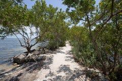 Buttonwood en parc national de Biscayne Image libre de droits