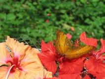 Buttterfly en Bloemen Stock Afbeelding