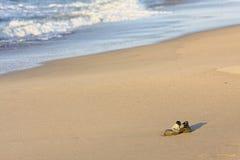 Buty na plaży obraz stock