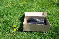 Buty w pudełku Obrazy Royalty Free