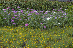 Butyful trädgård Arkivfoton