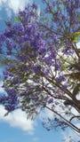 Butyfull three flowers in. Wunderschne blaue blumen etwas entfern entfert butyfull three flowers stock image