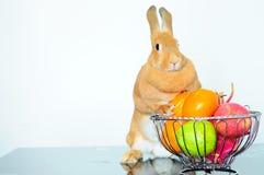 Coniglietto marrone sveglio con frutta fresca Fotografie Stock