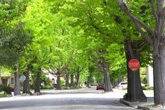 Buurtstraat met de grote groene bomen van het eindeteken Royalty-vrije Stock Foto's