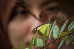 Buuterfly parkerar i Cameron Highlands Royaltyfri Foto