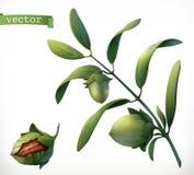 buxacee realistische Ikone des Vektors 3d lizenzfreie abbildung