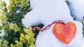 Buxbom i snön med en röd hjärta arkivbilder