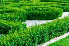 Buxus Garden Stock Image