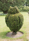 Buxus tree pruned as owl Royalty Free Stock Images