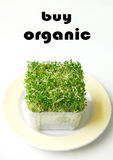 Buy Organic products alfalfa. Make the right choice, Buy organic - a conceptual image with a message, taken with a box of organically grown alfalfa sprouts Stock Photo