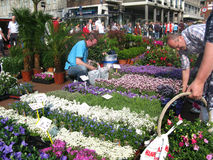 Buy plants on a Dutch flower market Stock Image
