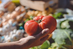 Buyer holding in hand big red ripe tomato with Royalty Free Stock Photo