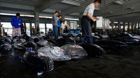 Buyers inspect tuna fish before bidding in Donggang, Taiwan Royalty Free Stock Photography