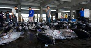 Buyers inspect tuna fish before bidding in Donggang Taiwan Stock Image