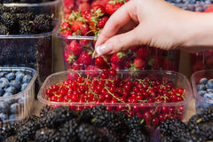 Buying berries in the local market Stock Photos