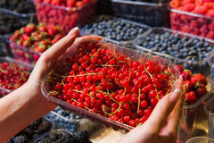 Buying berries in the local market Stock Photography