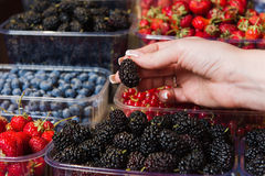 Buying berries in the local market Royalty Free Stock Photography