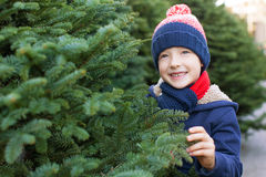 Buying christmas tree Royalty Free Stock Photography