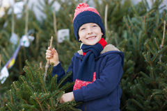 Buying christmas tree Stock Image