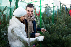 Buying a New Year tree. Royalty Free Stock Photos