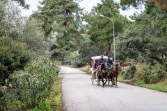 Buyukada των νησιών πριγκήπων ` κοντά στη Ιστανμπούλ, Τουρκία στοκ εικόνες
