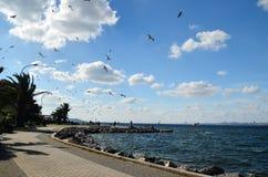 Buyukada Island, Istanbul, Turkey -MAY 10, 2018: Sea coast. Many seagulls in the sky. Buyukada is one of the Princes Islands on Marmara Sea royalty free stock images