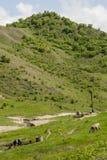Buzau - la Roumanie - heure d'été dans le côté de pays image libre de droits