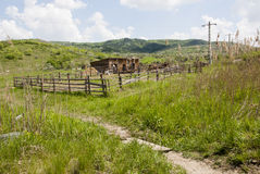 Buzau - la Roumanie - heure d'été dans le côté de pays photo libre de droits