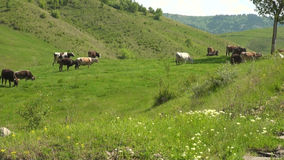 Buzau - Romania - Summer time in country side stock footage
