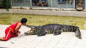 Buziak pokazuje krokodyla Zdjęcia Royalty Free