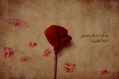 buziak pomadki czerwieni róża kilka Fotografia Royalty Free