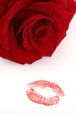 buziak wzrastał Obrazy Royalty Free