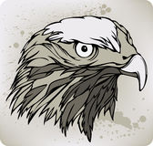 Buzzard hawk, hand drawing. Vector illustration. Stock Photos