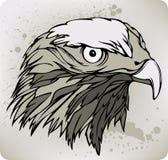 Buzzard hawk, hand drawing. Vector illustration. Buzzard hawk, hand drawing. Vector Stock Photos