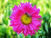 buzzing Royalty-vrije Stock Fotografie