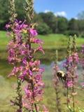 buzzing Stock Fotografie