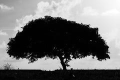 BW дерева и кота силуэта Стоковое Изображение RF
