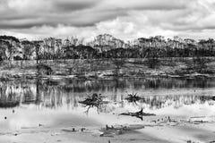 BW озера дождя лесного пожара WA Стоковая Фотография RF